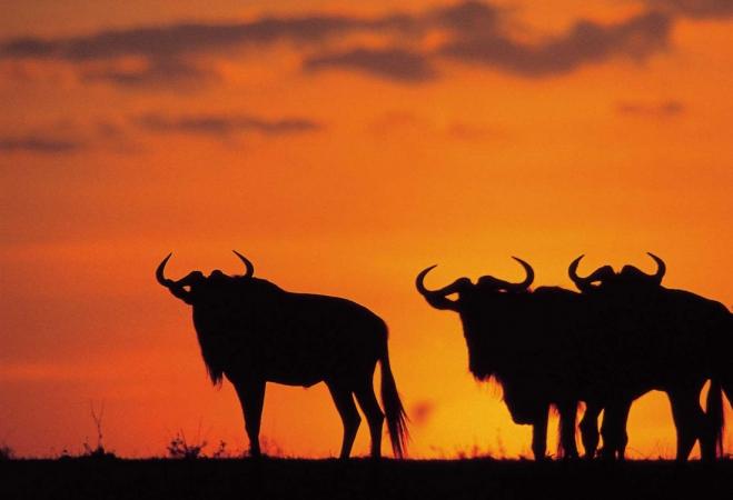 6-Day Aberdares, Nakuru, Masai Mara Kenya